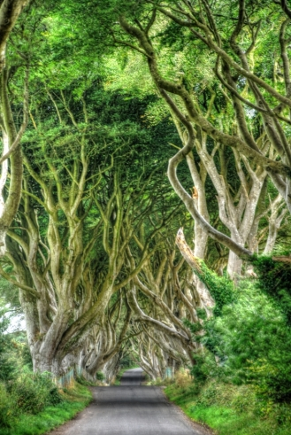 the dark hedges_1