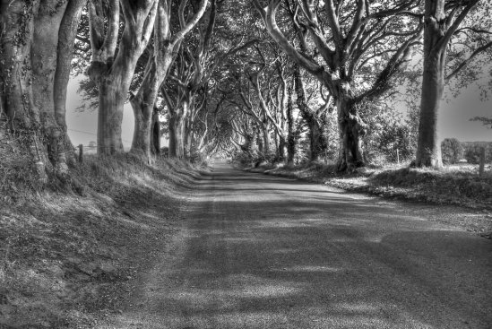 the dark hedges_3