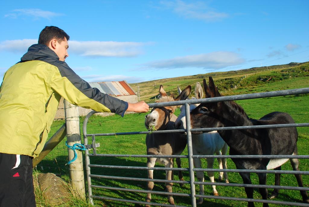 Donkeys, Malin Head, Ireland